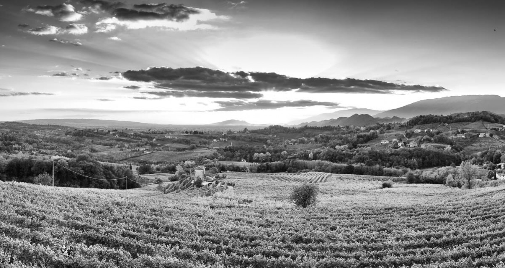 #blackwhite #landscape #prosecco #sunset #veneto #wine #fineart #bwstylesgf #bnw_captures #bnw_universe #insta_bw #bwmasters #igfotogram_bw #excellent_bnw #igblacknwhite #blackandwhite_perfection #bnw_demand #bnwmood #bnw_planet #bnw_society #bnw_magazine #bnw_globe #bnw_of_our_world #top_bnw #bw_lovers #bw_photooftheday #bw_crew #bwstyleoftheday #noir_vision #bnw_diamond #flair_bw #rsa_bnw #bnw_life #bnw_guru #love_bnw #jj_blackwhite #bwsquare