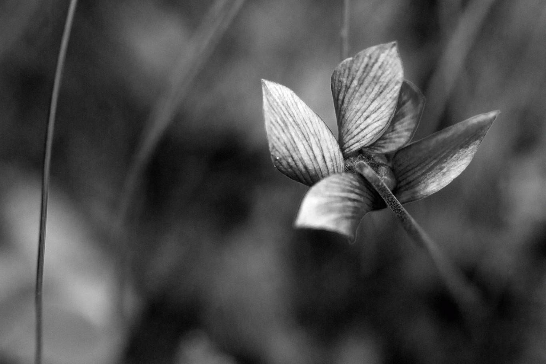 Piccolo fiore di bosco